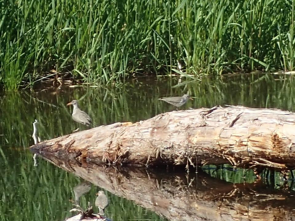 birds_wetlands