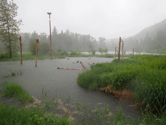 rain_wetlands